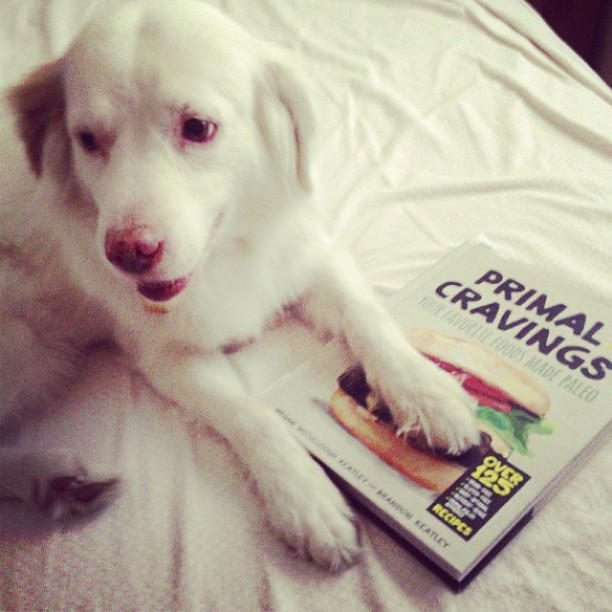 Buster loves @healthbentsays book already! #paleo dog