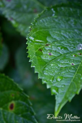 250: A little rain left behind