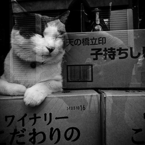 Kicking Back at the Sake Shop, Feline Style