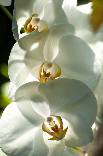 Glorchids by Jeff.Hamm.Photography
