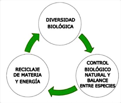 Circulo Biodiversidad