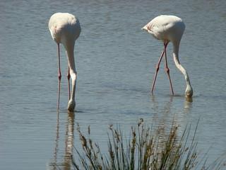 124 flamingo's