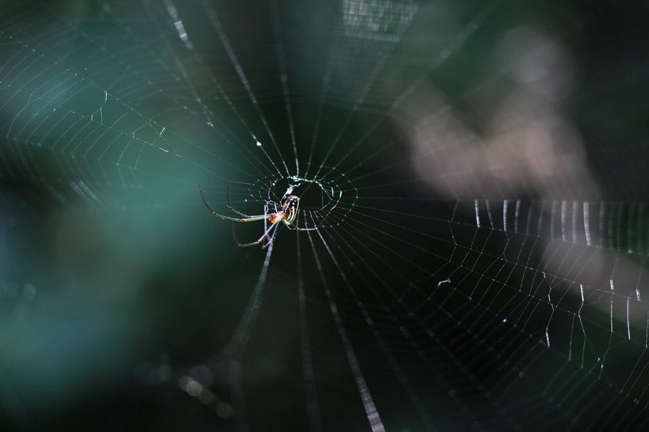 073113_bug_Spider06