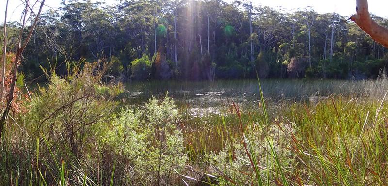 Tortoise Lagoon