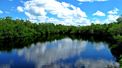 reflection nature water clouds reflex pond day florida wide conservation peaceful mangrove partlycloudy swfl puntarassa fmfl