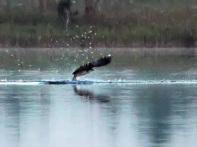 Osprey impact 4-20131020