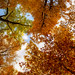 Autumn in Iroquois Park by Frank C. Grace (Trig Photography)