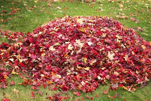 11-13 fall-9490-Edit-28