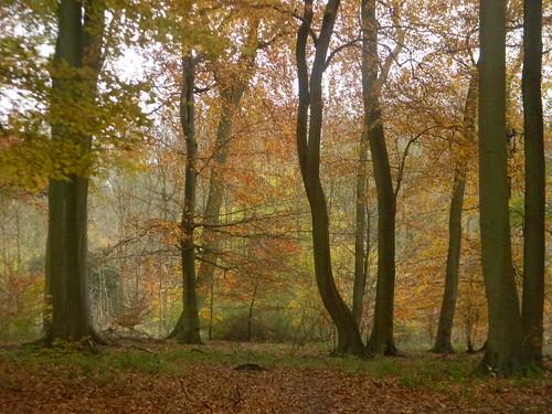 Autumn colour 4