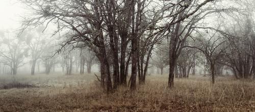 trees fog oregon forest grantspass