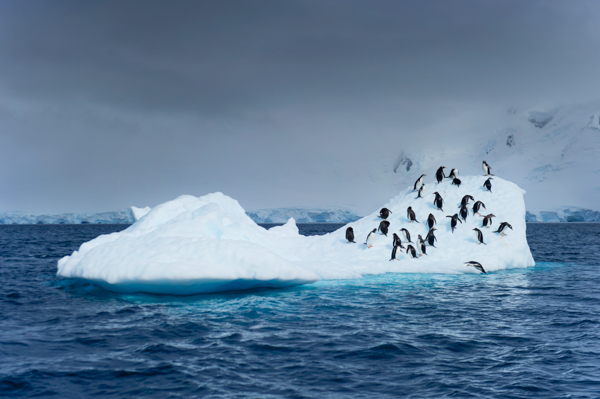 RYALE_Proposal_Antarctica-32