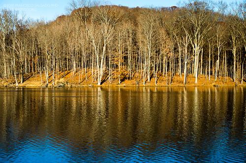 usa lake reflection tree forest lago us woods flora nikon nashville tennessee unitedstatesofamerica bosque árbol nikkor d4 radnorlake radnorlakestatenaturalarea 70200mmf28gvrii 2012112510994