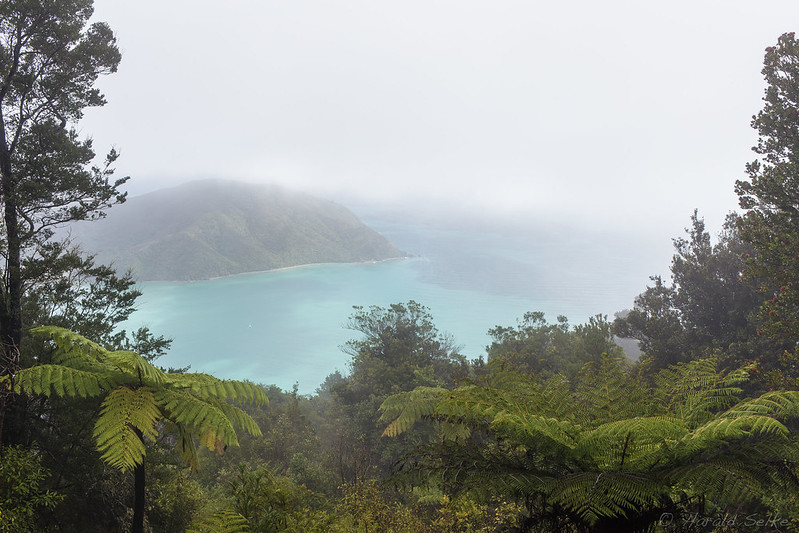 Whangarae Bay