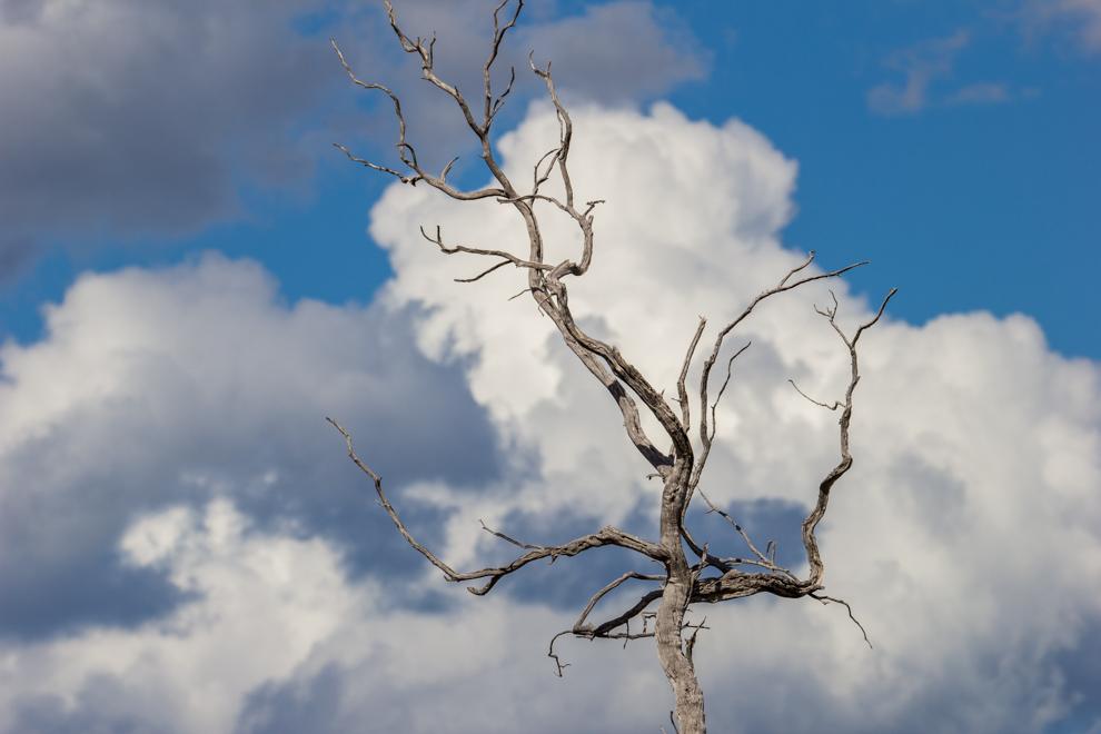 Ramas secas de antiguos árboles siguen de pie a pesar del tiempo. La salinidad del terreno y la sequía son factores que aportan al deceso de algunos árboles. Sin embargo sirven de morada y estadía para muchas aves. (Tetsu Espósito)