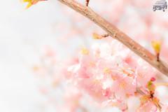 WEB-LR_20140304_0066.jpg