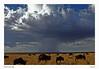 Storm-Mara