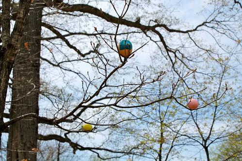 Cascarones in tree