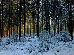 Winterspaziergang -  Winter walk