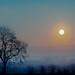 Winter sun by Eric Goncalves