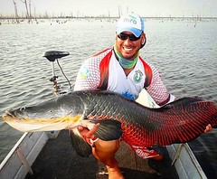 I M P R E S S I O N A N T E a cor desse pirarucu fisgado na Amazônia pelo Higor Marques.  #pescaamadora #pesqueesolte #baitcast #fly #pescaesportiva #sportfishing #fishing #flyfishing #fish #bassfishing #bass #angler #anglerapproved #monsterfish #bigfish