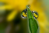 Dewdrops in springtime