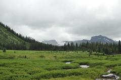 Alpine-like meadow
