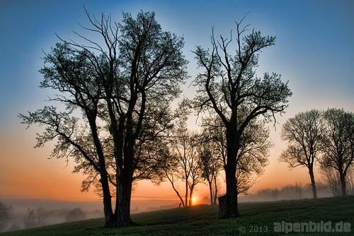 morning sun tree nature fog contrast sunrise landscape bayern deutschland bavaria spring nikon nebel natur foggy meadow wiese alm landschaft sonne kontrast sonnenaufgang morgen contrasts baum frühling topaz morgens d800 kontraste 德国 巴伐利亚 neblig 50fav 阳 badheilbrunn fletzen d800e nikond800e alpenbildde