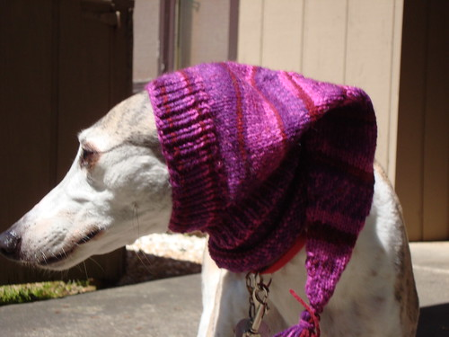 Pointy Pink Greyhound Hood