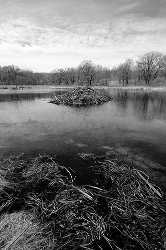 Beaver Lodge by dcclark