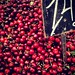 It's cherry season at the shuk! Woo.