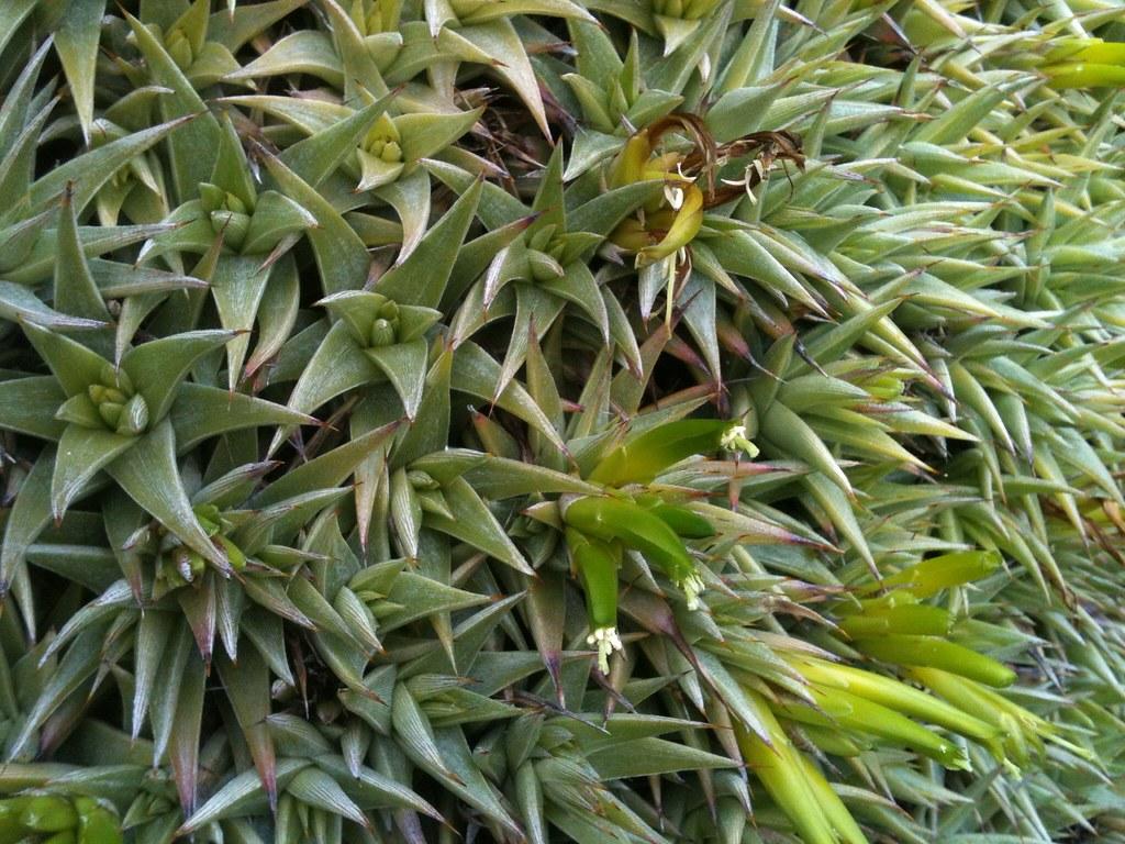 Aloe In Giardino giardino esotico | vittorio fumagalli | flickr