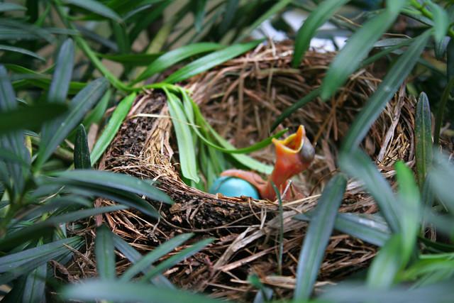 159.365 {Baby Bird}