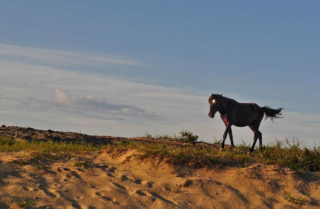Corova's Horses (1)