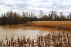 Landscape - Staffordshire