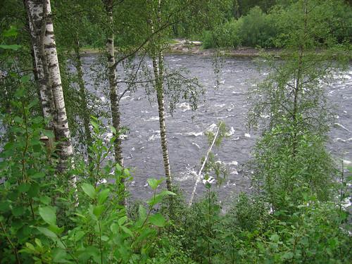 thegreatoutdoors natureinsweden swedishculturethecountiesofswedennatureflowersriverrapids
