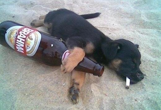 Apodos para borrachos y borrachas