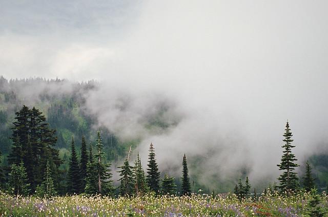 mist and meadows and mt. rainier