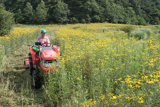 高木さんのアイデアでトラクターを使用.広範囲を刈り取れる.