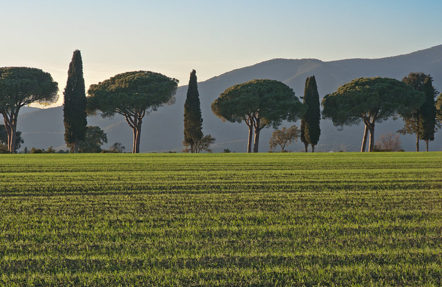 Il paese dove la terra è verde anche d'inverno - The country where the land is green even in winter (Maremma, Tuscany, Italy)