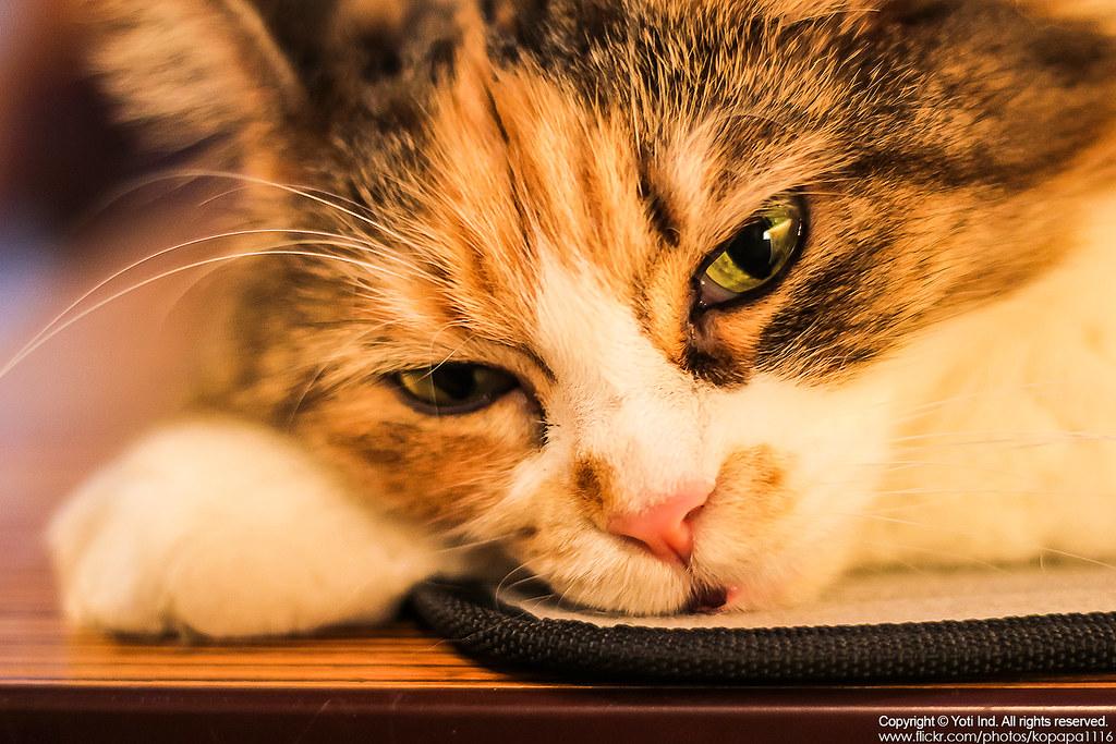 元氣貓主題餐廳 IMG_6036