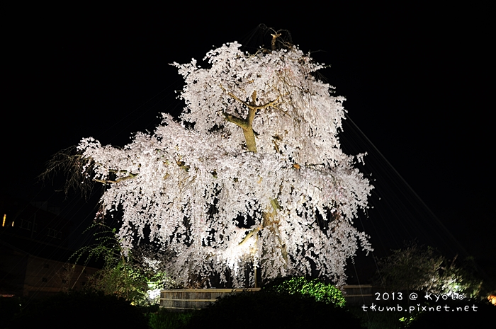 円山公園 (4).jpg