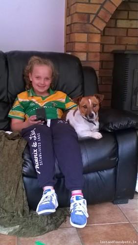 [Reunited] Thu, Feb 19th, 2015 Lost Male Dog - R421, Offaly