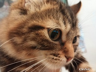 CIRCLEG 語音信息 總有兩派人各持己見 長洲 中環 摩天輪 YAHOO 旺角 貓CAFE (36)