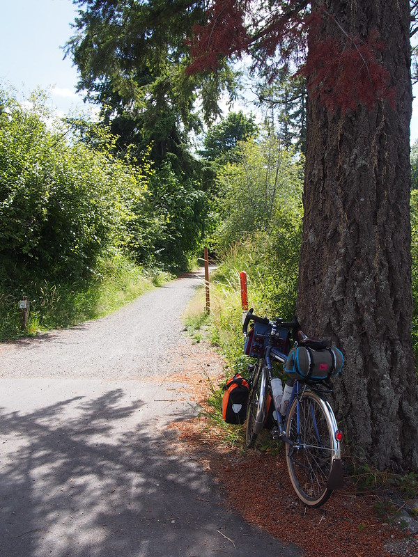 Chehalis Western Trail: Gravel: The trail is fully paved…except for this stretch that connects it to the road.  Embedded rocks and roots kept me alert.