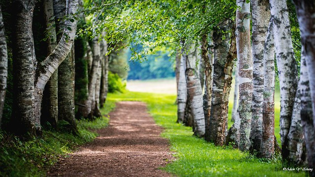 Quiet Path ( 寂静的小路 )