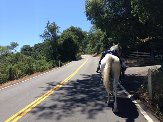 An equestrian.