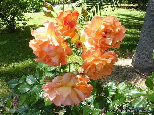 Nel Mondo delle Farfalle - Rose rosse