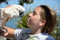 Cockatoo bird eating from girls mouth