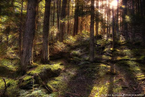 usa tree forest landscape nikon rockymountains glaciernationalpark d300 tomlussier usaglaciernationalparkmontana