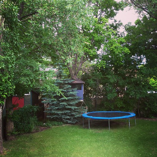 We popped by the house that will be ours in a month to get some measurements and things. This is going to be our backyard, minus the trampoline but including the tree house. I have no words for how amazing this will be.